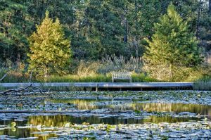 The Houston Arboretum Pond