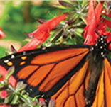 Attracting Birds and Butterflies to Your Backyard: Native Landscaping with Glenn Olsen @ Houston Arboretum & Nature Center