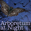 Arboretum at Night Family Programs