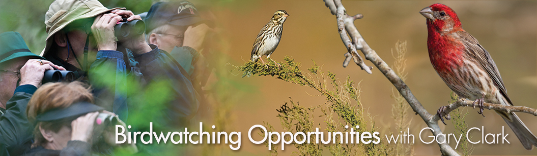 BirdwatchingClassesFall14Banner-copy