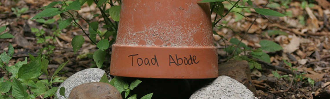 DIY Toad Abode
