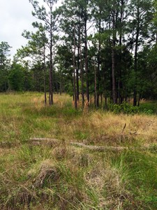 This is a picture of the Green Bayou Mitigation Bank, healthy representation of tree motts growing on higher elevation areas and grasses in the lower zones. The goal for the test plot is to look more like this more native landscape.