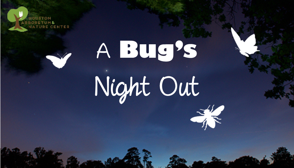 Bugs night out FB event