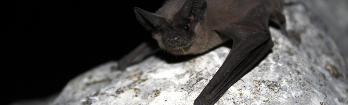 Batty About Bats