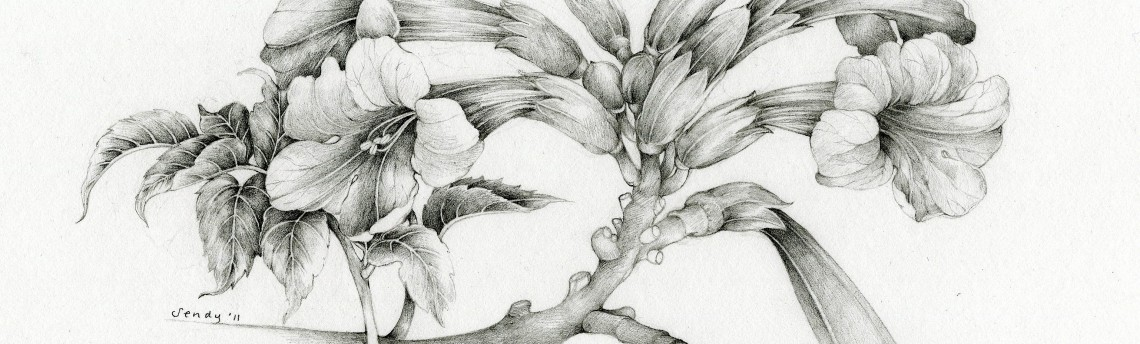 Botanical Illustration: Graphite Pencil