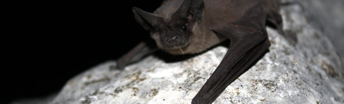 Arboretum at Night: Bats